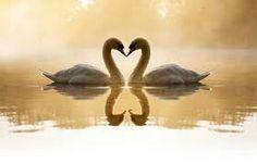 Que amor!!!!!!!!!! É o amor!!!!!!!!!!!