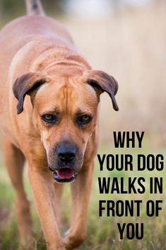 dogtrainingpuppytraining #dogtrainer #dogtrainingtips #dogobedience #dogtrainingadvice #dogbehaviour #puppytrain #puppytrainingclass #puppytrainer #dogproblems #trainyourdog #balanceddogtraining #servicedogtraining #dogtraining101 #puppytrainingtips #puppytraining101 #dogtrainingisfun #dogtrain Dog Training Courses, Training Your Dog, Happy Animals, Animals And Pets, Pet Dogs, Dogs And Puppies, Sunset Quotes, Dog Varieties, A Husky