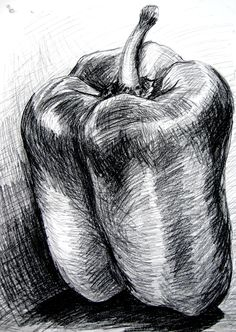 bell pepper - charcoal | Still Life drawing | Pinterest