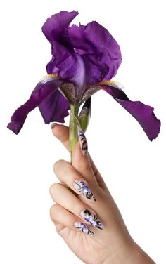 The female hand with beautiful nails, holds a flower, on a white background Nail Designs 2014, French Tip Nail Designs, French Tip Nails, Cool Nail Designs, Purple Iris, Purple Love, All Things Purple, Deep Purple, Opi Gel Color Chart