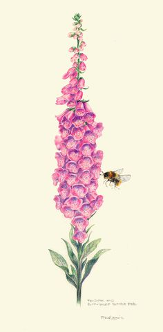 Foxglove And Buff-tailed Bumble Bee by Bev Lewis