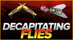 Decapitating Flies + Q&A Details Earn Money, Bugs, Crushes, Salt, Detail, Videos, Earning Money, Beetle, Insects