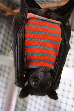 Button the batty!