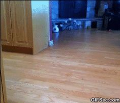 Funny GIF Fire Dogs