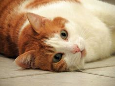Cats, Animals, Gatos, Animales, Animaux, Kitty, Cat, Cats And Kittens, Animal