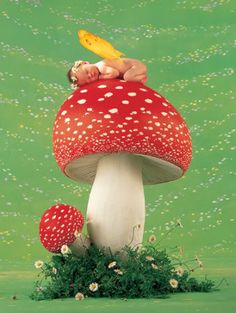 Anne Geddes Baby Mushroom Photo:  This Photo was uploaded by urgirljen63. Find other Anne Geddes Baby Mushroom pictures and photos or upload your own wit...