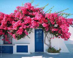 Challenge yourself with this Facciata della casa a Santorini, Grecia jigsaw puzzle for free. Santorini House, Santorini Greece, Crete Greece, Athens Greece, Beautiful Gardens, Beautiful Flowers, Beautiful Places, Greece House, Facade House