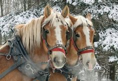 Sleigh Ride!!!  I think they're smiling :)