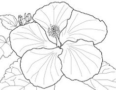Spring Flowers Coloring Page Of Early Rising Bloomers Fabulously Flashy Flora We Adora Pages Hibiscus Lilly Petunia And More