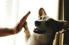 Touch my human's palm, get a treat! I love how this works!
