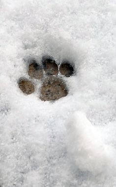 They leave paw prints on your heart!
