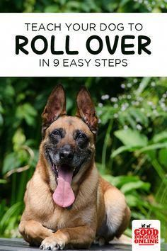 How to teach your dog to roll over. This easy and fun dog trick is a great way to bond with your dog and have some doggie fun. Check out these dog training tips to teach this trick to your dog. Dog Minding, Easiest Dogs To Train, Best Dog Training, Dog Barking, Dog Hacks, Dog Behavior, Dog Care, Best Dogs, Puppies