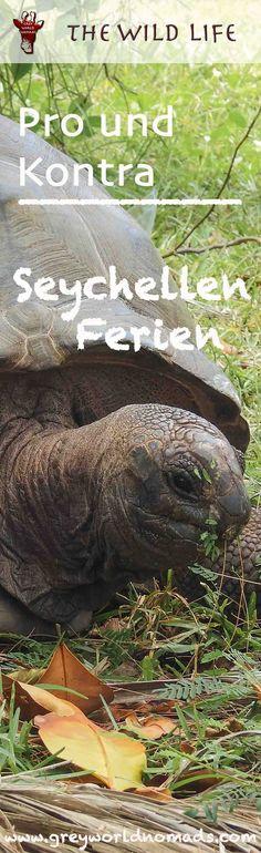 Seychellen Ferien, sind es die Paradiesinseln? Wie ist das Schnorcheln  und Tauchen in den Seychellen? Was wird für die Umwelt getan? #seychellen #insel #ferien