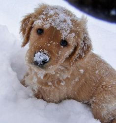 Puppy in the snow.