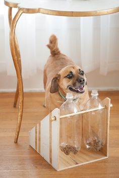 Spin-out dog treat game | The Owner-Builder Network
