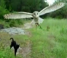 the owl and the cat, this is worth watching