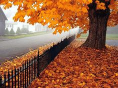 the smell of fall leaves and hearing them crunch under foot