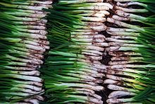 Global Cuisine The World's Top 5 Culinary Obsessions Salsa Calçots, Carne Madurada, Barcelona Food, Barbecue Restaurant, Spanish Dishes, Puerto Rican Recipes, Sweet Sauce, Toasted Almonds, Allium