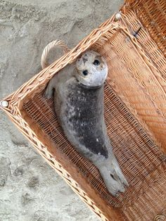 Super Cute Animals, Cute Funny Animals, Cute Baby Animals, Animals And Pets, Seal Pup, Baby Seal, Cute Seals, Animal Pictures, Cute Pictures