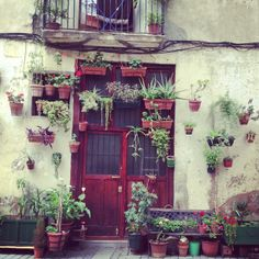 plants - Barcelona