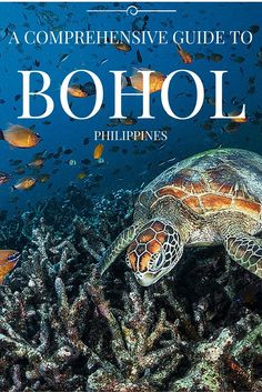 Going to Bohol in the Philippines? Are you a bit lost in all the organization and what to do? Let us help you with all the best things to do in Bohol Voyage Philippines, Philippines Vacation, Philippines Travel Guide, Bohol Philippines, Phillipines Travel, Philippines Country, Visit Philippines, Cebu, Manila