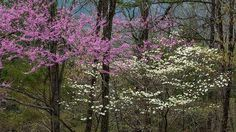 A walk in the woods in springtime... New hope and food for the soul!