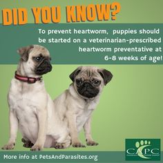 pets risk heartworm infection your alone