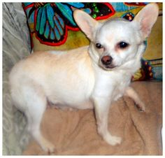 Close  OptionsShareSendLikeShow more reactions Photos of Bridgeport, CT lost, found or adoptable pets  Ryan BetasBridgeport, CT lost, found or adoptable pets 5 hrs ·   White female Chihuahua, her name is Kiki, got out of the yard sometime last night! We live on Madison Ave in Bridgeport, right by the Trumbull Mall. Please notify if found/seen!