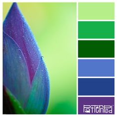 Nature Brights #patternpod #patternpodcolor #color