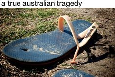 100 Really Fucking Funny Memes About Australia A Texas tragedy, too! Just 100 Really Fucking Funny Memes About AustraliaA Texas tragedy, too! Just 100 Really Fucking Funny Memes About Australia Australian Memes, Aussie Memes, Australia Funny, Australia Day, Meanwhile In Australia, Dankest Memes, Mum Memes, Dead Memes, Jokes