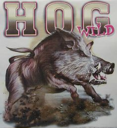 BOAR HUNTING HOG WILD