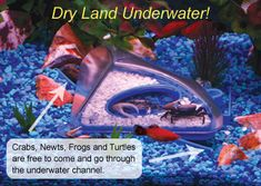 Make a dry spot underwater for a biosphere. Too cool!!...did you know that this is how mermaids keep underwater terrariums without lids?