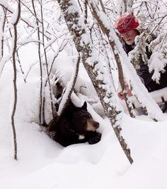 7 Best Nabs Images Black Bear Bear We Bear