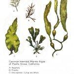 Natural Science Illustration and Art, Botanical Illustrations