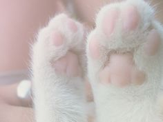 ღ❥Pink and White ❥ღ Pretty pink kitten paws.