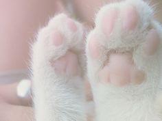 ღ❥Pink and White ❥ღ Pretty pink kitten paws.