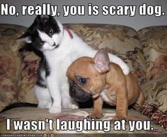 No, really, you is scary dog. I wasn't laughing at you.