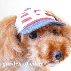 #2016ss #新作 です  マリンボーダーメッシュCAP   爽やかな印象のシンプルな マリンキャップです  フロントにはGのワッペンが付いてます    #gardenofeden  #ガーデンオブエデン  #japanmade #犬の帽子 #犬帽子  #hat #帽子 #キャップ #cap #dogcap #dogfashion  #dogstyle #doghat #doggoods #犬 #いぬ #イヌ #わんこ #ワンコ #トイプードル #被り物 #toypoodle #dogs #dog  #dogstagram #dogsofinstagram  #dogs_of_instagram by gardenofeden_official #lacyandpaws