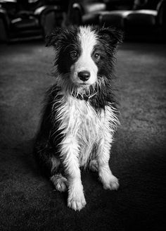 There is nothing friendlier than a wet dog.