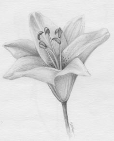 ▷ 1001 + ideas and tutorials for easy flowers to draw + pictures Flower Sketch Pencil, Pencil Drawings Of Flowers, Flower Sketches, Pencil Art Drawings, Art Drawings Sketches, Drawing Flowers, Realistic Flower Drawing, Flower Pattern Drawing, Floral Drawing