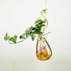 Waterdrop Glass Flower Vase Hanging Hydroponic Container Terrarium Decor | eBay