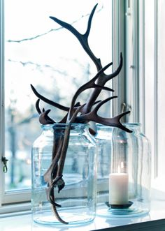 what the heck are they doing with antlers in a jar?!