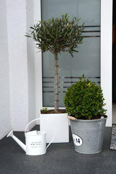 Deko vor der Haustür - Olivenbaum und Buchsbaum