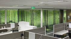 #Environmental Graphics #Glass graphics. D.E.R.M office fitout. | surfacegroup.com.au