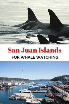 Have you ever heard of the San Juan Islands? They're not a tropical paradise … Have you ever heard of the San Beautiful Places To Travel, Beautiful Beaches, Romantic Travel, Vancouver Island, British Columbia, Beautiful Beach Pictures, Lanai Island, Vacation Spots, Vacation Destinations