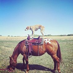 Maddie on a Horse.
