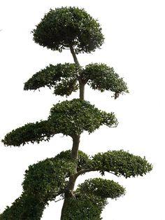 grannys tree psd by GRANNYSATTICSTOCK
