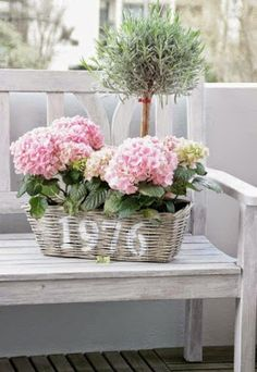 Der JaRdin von der Isle of She - Rosmarin Heilpflanze Green Hydrangea, Hydrangeas, Shabby, Geraniums, Vintage Shops, Pink Flowers, Flower Arrangements, Beautiful Flowers, Glass Vase
