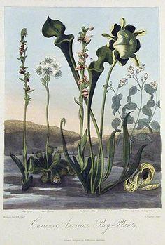 Image result for robert john thornton prints