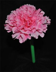 Pink Carnation Pen